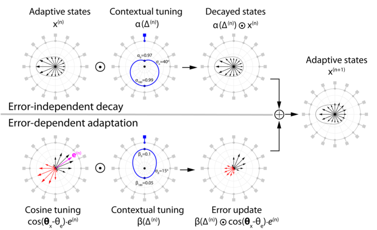 Error tuned model that incroropates adaptive states which decay and an dependent adaptation which updates the states.